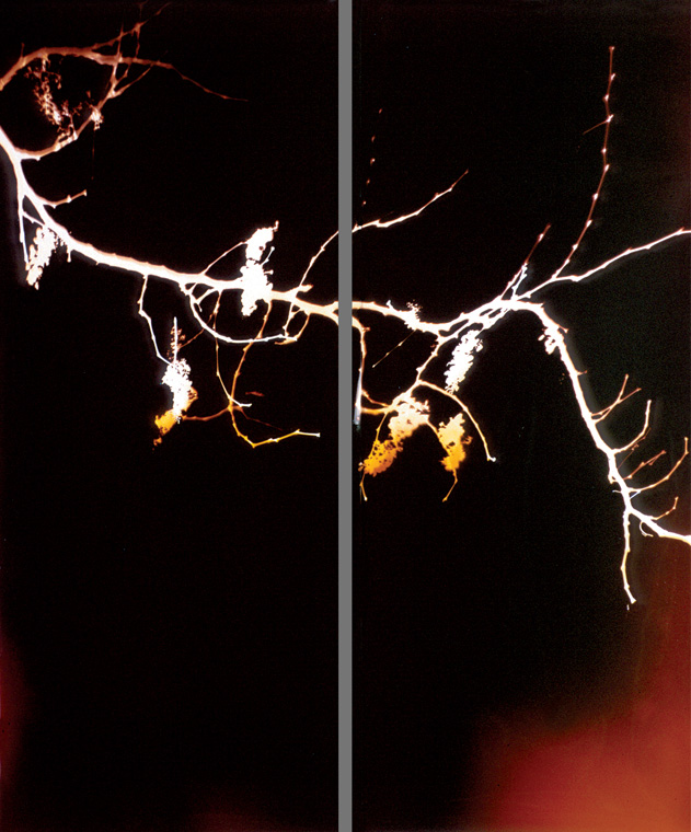 78 x 60 inches (2 panels), Light on photo paper, unique. ©1995